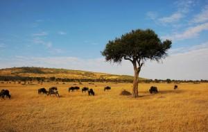 【马赛马拉国家公园图片】东非猎游之全部剩余:马赛马拉Masai Mara及安波塞利,桑给巴尔岛。终结篇。