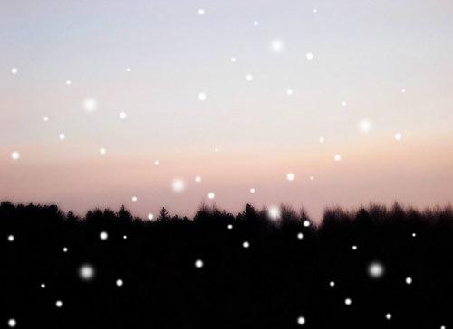 七夕之夜 数千只萤火虫将点亮广州白云山