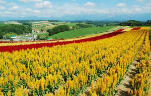 北海道图片