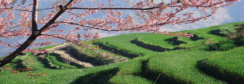 玉溪竹海菁生态风景区