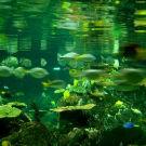 香港海洋公园攻略图片