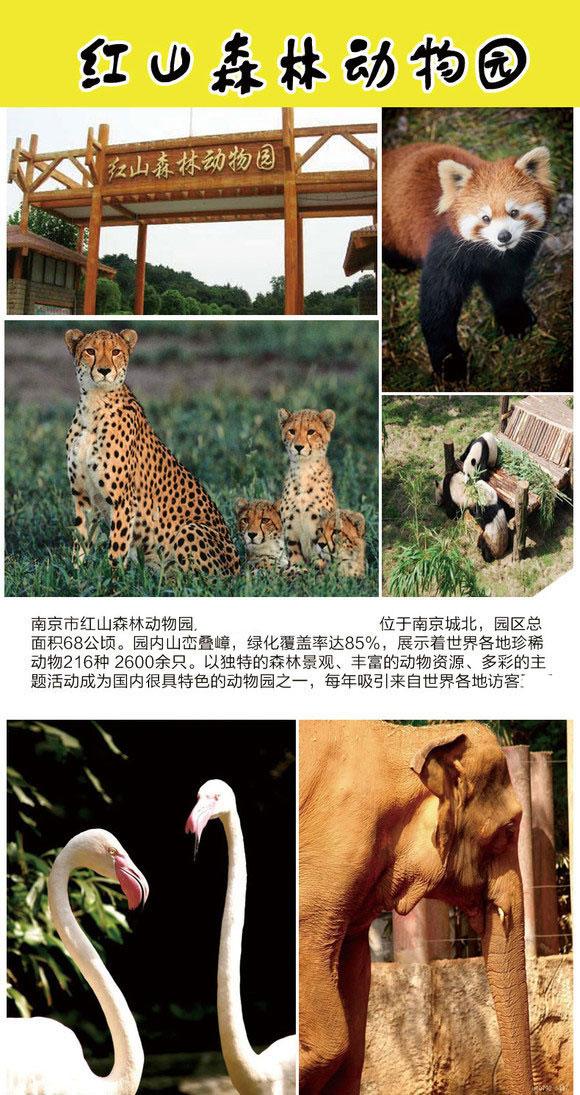 南京红山森林动物园门票(含两栖爬行馆参观)