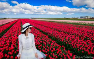 【德国图片】【蜂首纪念】莱茵河畔,穿行于花花世界--德荷赏花之旅