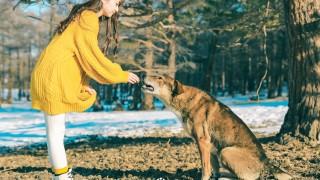 一路跟隨的大黃狗