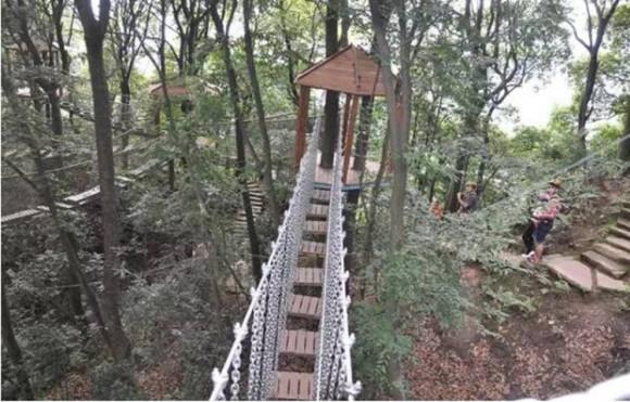 四川雅安蒙顶山风景区树冠漫步成人体验票(需另购景区
