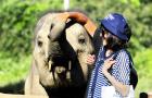 清邁美莎大象營美旺大象營公益象營特色一日游親子游(擁抱象的微笑 無傷騎象喂象 給大象洗澡 可搭配叢林飛躍)