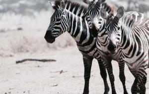 【坦桑尼亚图片】星空下的塞伦盖蒂 你用生命写下这首赞歌 | 坦桑尼亚8日记