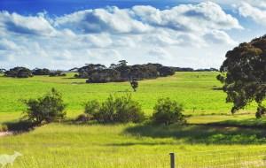 【袋鼠岛图片】【那茶出品】带着Co姐去旅行——大澳村奇妙旅程之袋鼠岛篇