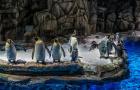 香港海洋公园+香港经典怀旧观光3日游(含园区所有娱乐项目+1天自由活动+赠送L签名单)
