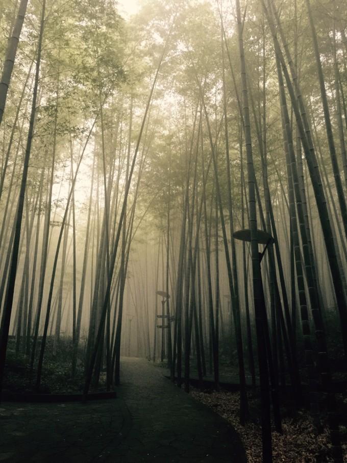 览竹海,这里的竹子品种很多,形态却各不相同,有一种叫青竹的特别显眼,一节一节的竹筒很干净,竹叶长得细长细长的,像柳树的柳枝,嫩嫩的叶子,像一把把小扇子,扇呀扇,扇走了热气,带来凉爽,竹林里,每一株竹子都长得亭亭玉立,像美丽的姑娘。竹子除了给我吗遮阳、带来清新的空气,它的用处还有很多。可以用来造房子,随便走进这里的哪间铺子,便可以看见很多用竹子编作的日用品、凳子、玩具枪,还有可以吃的竹笋,我们中午吃的就是跟竹子有关的食物,美味极了。竹子也真算得上全身都是宝,竹筒还可以做竹筒饭,吃的时候还有一股竹子的清香味。