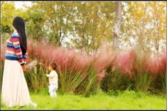 深秋十月,恰似一抹粉黛迷人眼,江心洲粉色花海