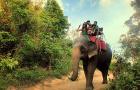 全泰立减丨清迈 · 美旺大象营+丛林飞鼠Flying Squirre32台丛林飞跃一日游(赠送纪念T恤)