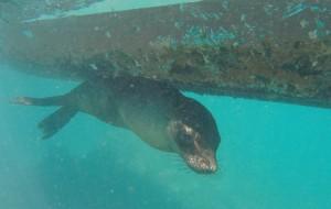 【加拉帕戈斯群岛图片】神奇动物在哪里(完结篇,加拉帕戈斯群岛自助游攻略)