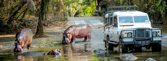 巴厘岛野生动物园门票 骑大象 狮子餐厅bali safari marine park