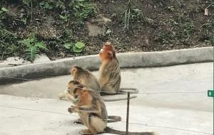 【宁陕图片】朝阳沟的金丝猴