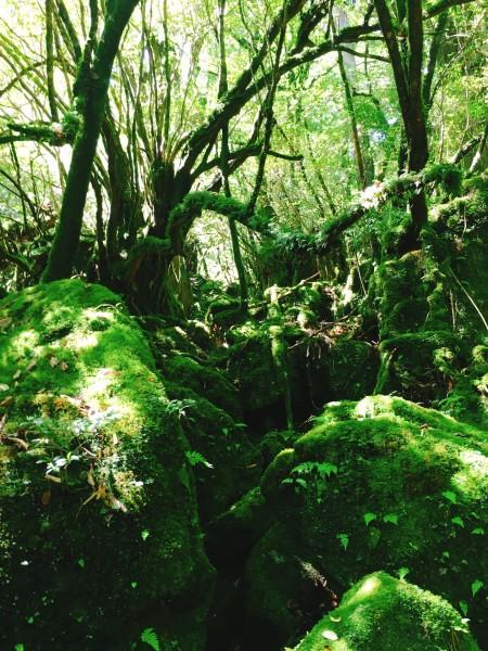 壁纸 风景 森林 桌面 450_600 竖版 竖屏 手机