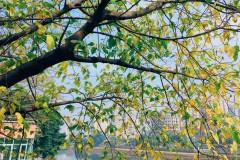 【假装在侬的城市生活】榕城,福Zhou
