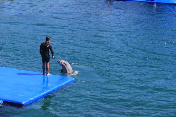 海豚表演挺好看的,海豚宝宝们都好乖好乖~表演得超级好看!