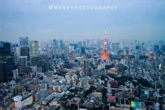 油画般的11月霓虹   我在东京被狂追了两条街(附攻略级日本药妆必败清单)