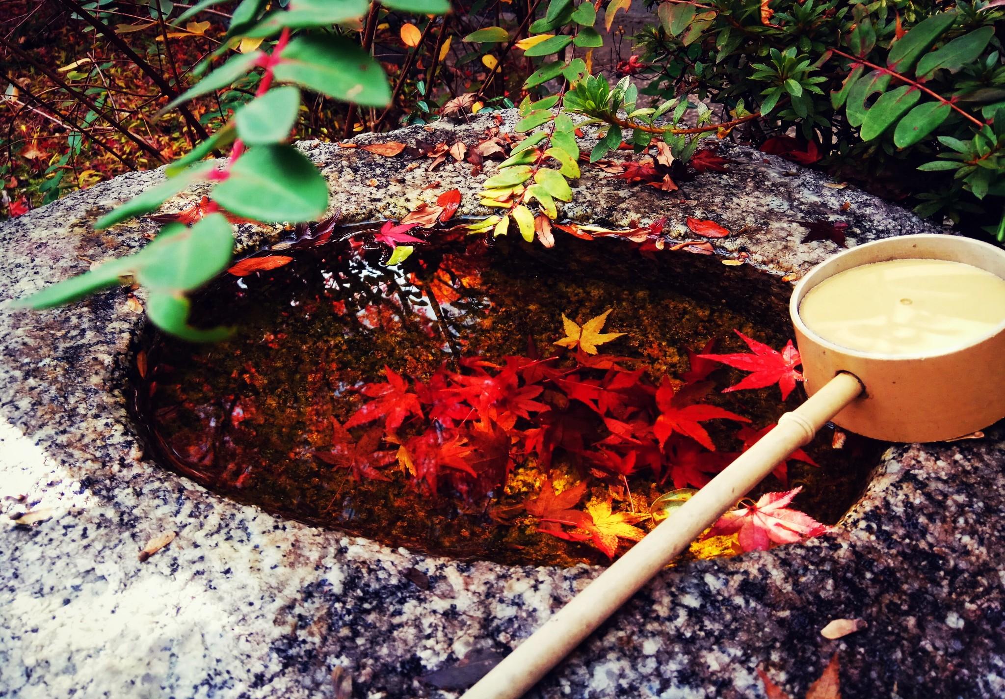 枫从京都来—京都奈良六日游_游记