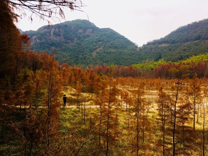 导航目的地:临海小芝镇胜坑村红树林.