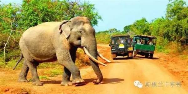 壁纸 大象 动物 600_300