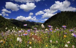 【新龙县图片】6至8月去四川人少的拉日马大草原赏花去