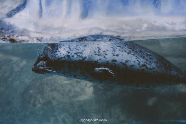 有个海底隧道拍照片无敌托马斯好看,然后有鲨鱼和比较大的深海鱼.