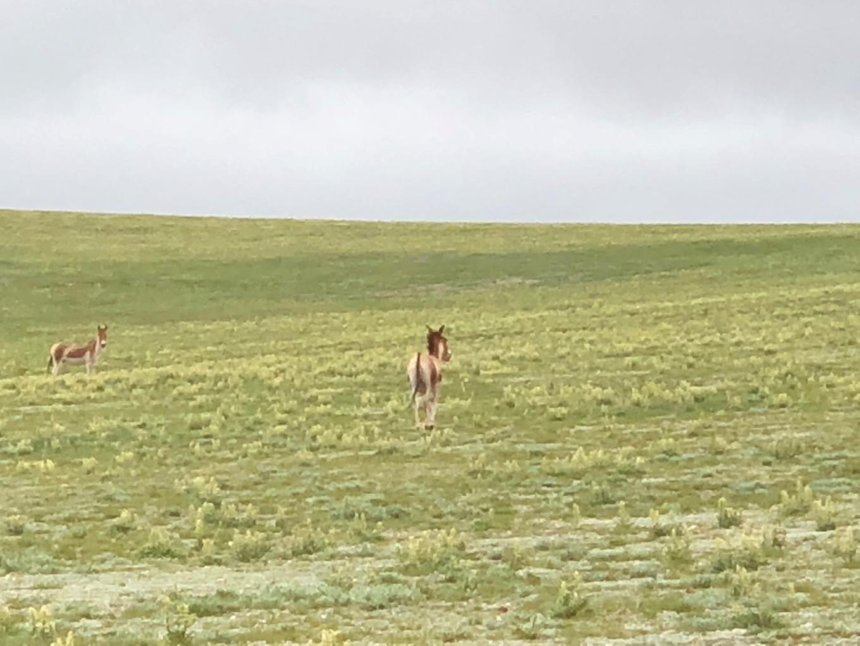 西藏--阿里,與您相伴的時光 113