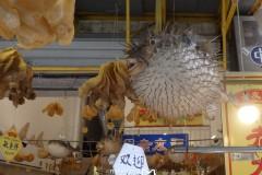 2017香港昂坪市集、大澳岛棚屋、文物酒店、太空馆、科学馆