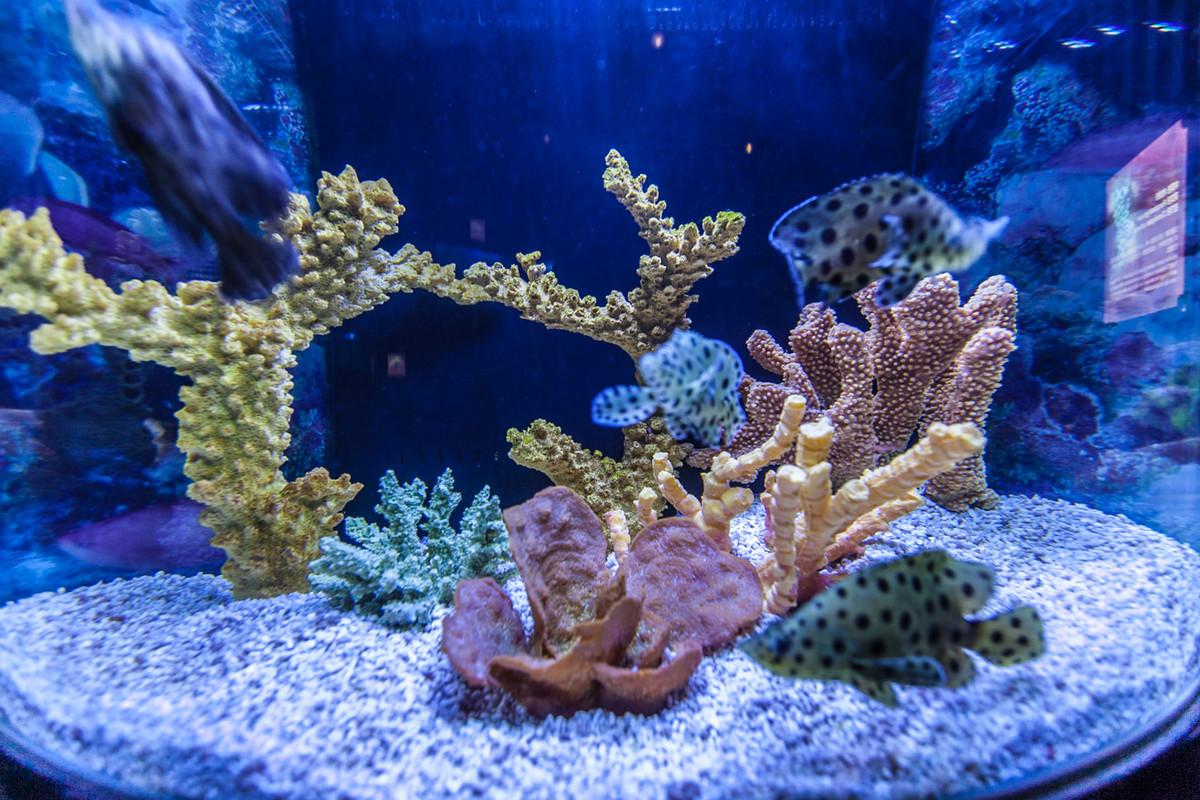壁纸 海底 海底世界 海洋馆 水族馆 1200_800