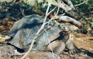 加拉帕戈斯群島娛樂-Rancho Primicias - Giant Tortoise Reserve