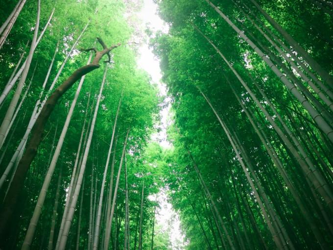 山水竹林風景壁紙小鹿