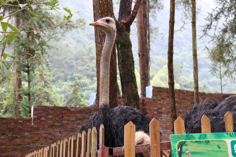 因此,在云门山,你会看见各种不同的小动物在园区自由慵懒地走动.