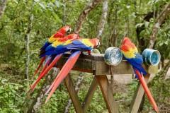 洪都拉斯行 – 科潘玛雅遗址