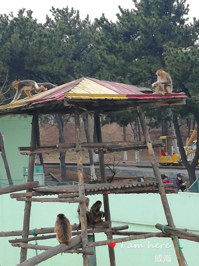 威海神雕山野生动物园,烟台旅游攻略 - 马蜂窝