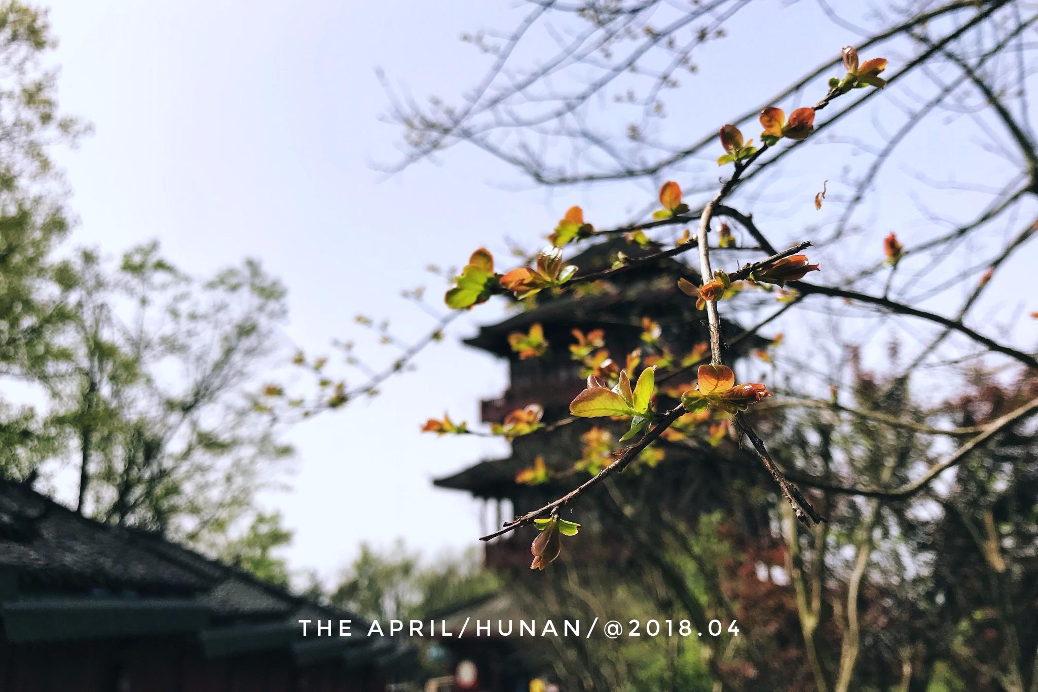 #人间四月天#八人同行 说走就走的旅行【张家界景区-凤凰古城】