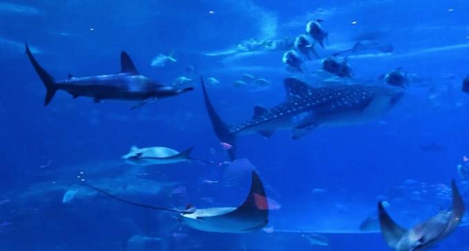 壁纸 海底 海底世界 海洋馆 水族馆 680_364