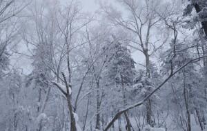 【二世古图片】想去感受零度以下的寒冷~~~