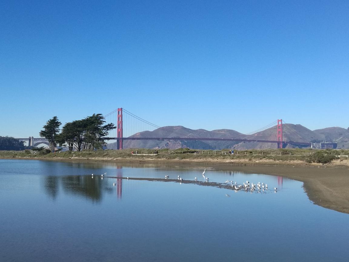 旧金山公交一天游,艺术宫-金门大桥-39号渔人码头-铛铛车,体验旧金山市民的生活,超轻松!