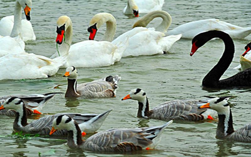海南 海口天鹅湖动物基地公园 电子票 即买即用