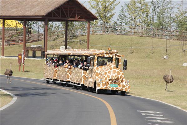 当天可定南通森林野生动物园门票含车行区乘小火车游览含三大主题演出