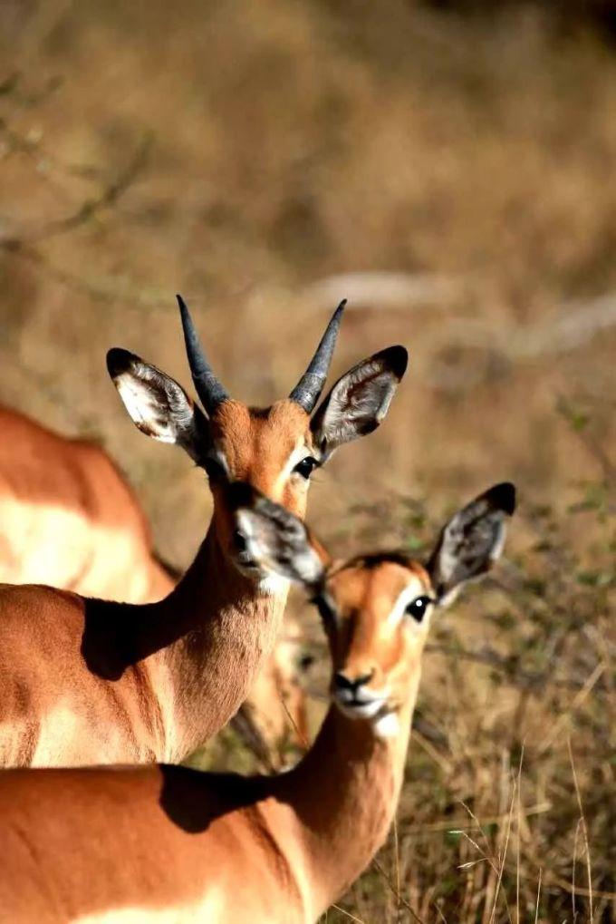 比邻斯堡野生动物园是南非第四大野生动物园