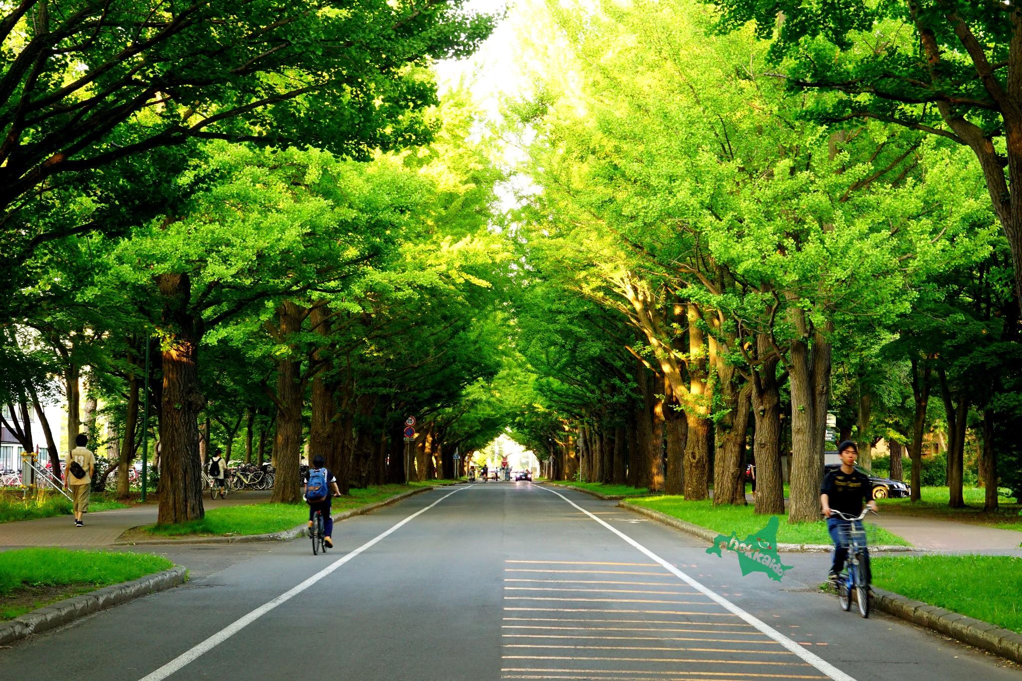 【北海道景點圖片】北海道大學札幌校區