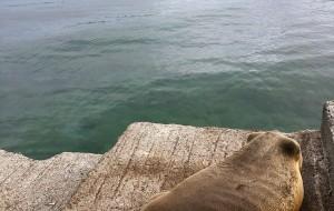 加拉帕戈斯群島娛樂-Red Mangrove Aventura Scuba Diving