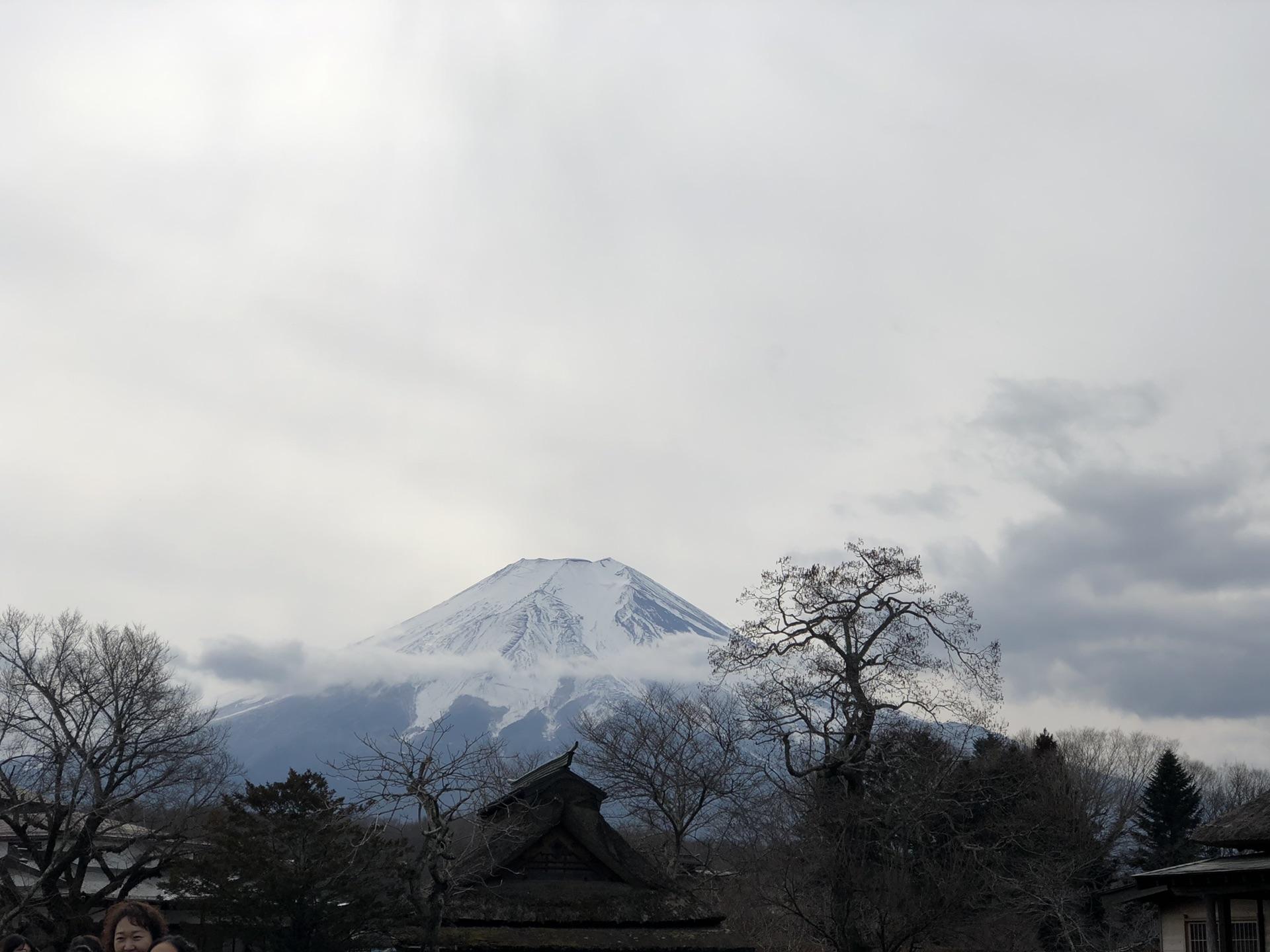 东京富士山京都奈良大阪九日家庭游