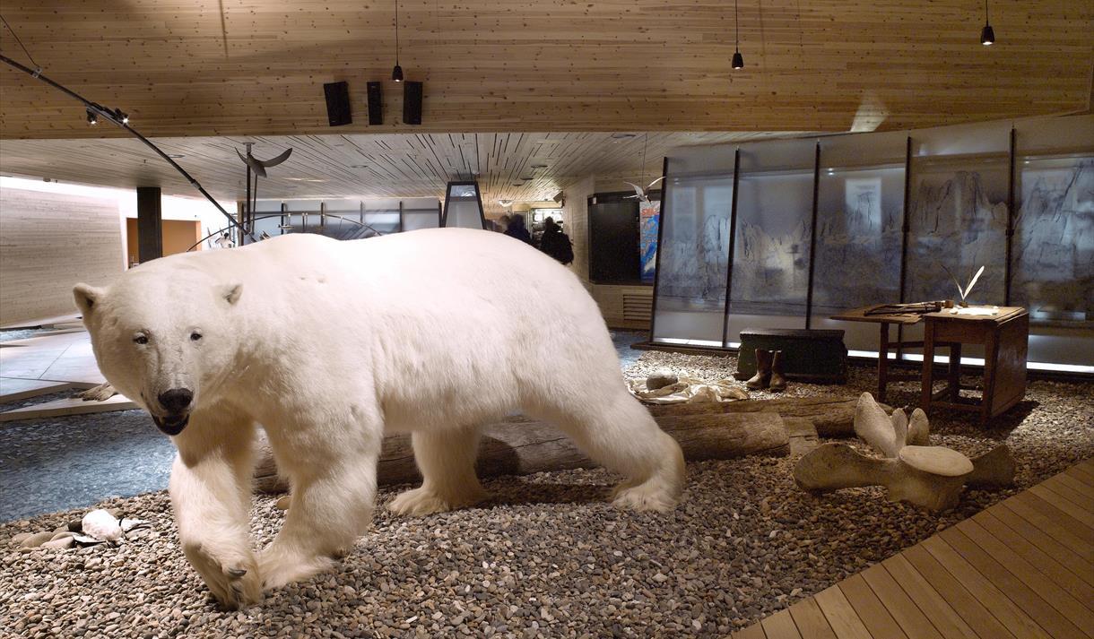 巴章鱼-北极熊岛)【观看北极熊,偶遇北极秘密,与北极野生动物寻找】鸟类的群岛图片
