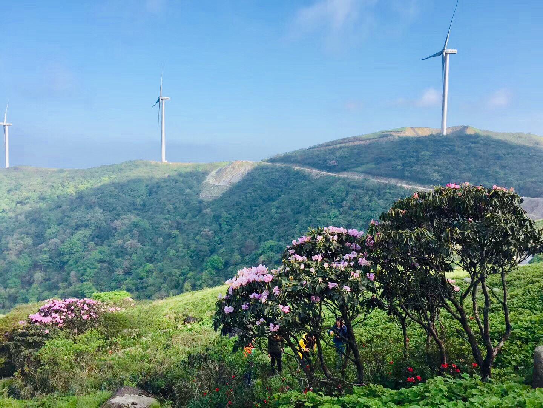 桂林宝盖山的风车与杜鹃