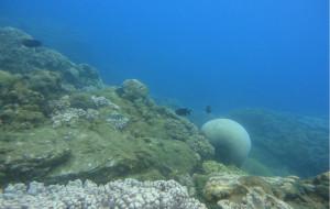 海南娱乐-亚龙湾潜水