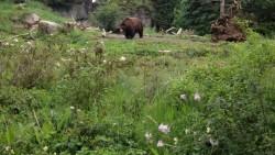 西雅图景点-林地公园动物园(Woodland Park Zoo)